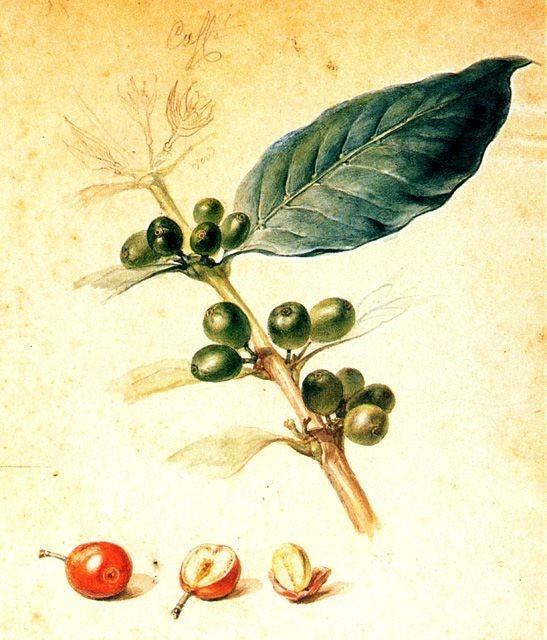 Café (1823)