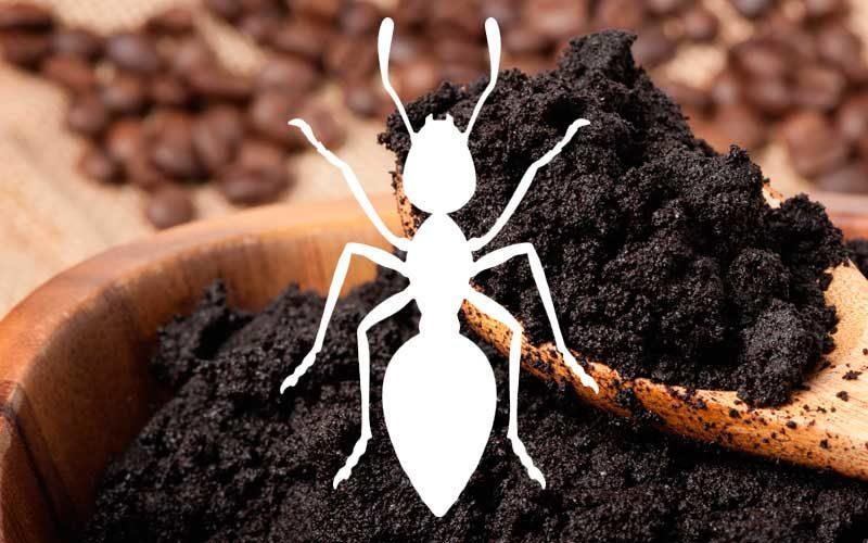 Use a borra de café para espantar formiga!